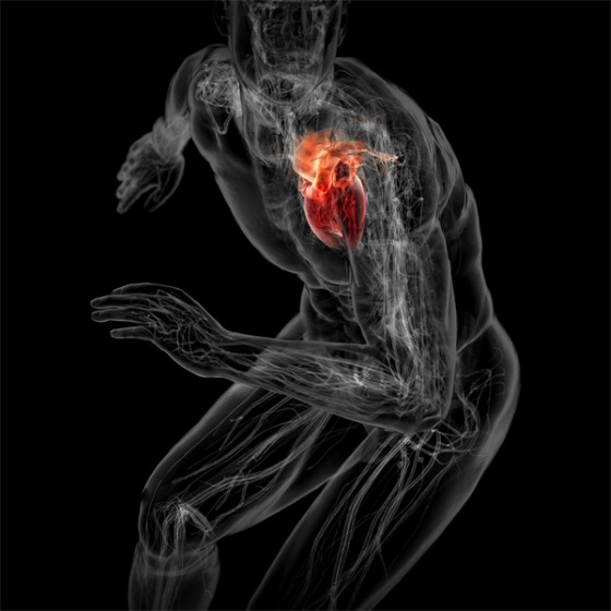 Хирурги пересадили «мертвое» сердце