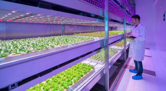 Philips начинает строить фермы для выращивания овощей