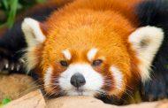 Mozilla закроет программу тестирования Test Pilot